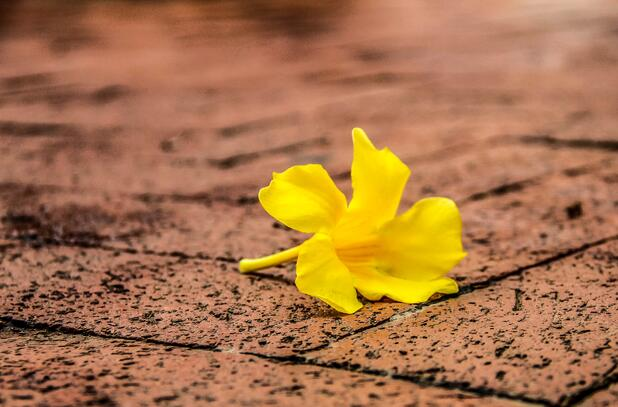 amarillo color
